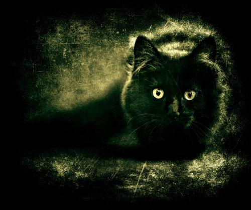نتيجة بحث الصور عن horror cat